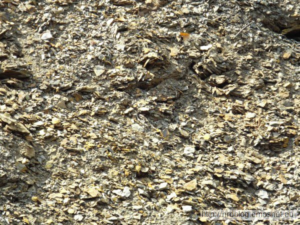 Grube Messel - wyschnięte łupki