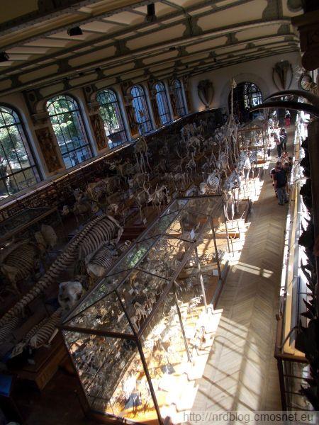 Galeria anatomii porównawczej, Paryż
