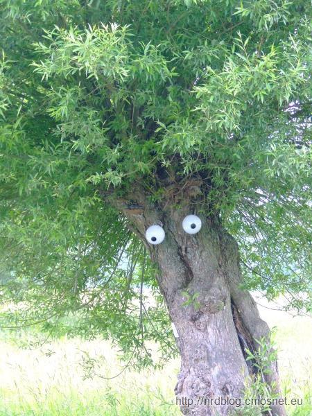 Struwwelpeter - drzewo w lesie miejskim, Frankfurt