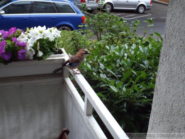 A na balkonie siadam tak!